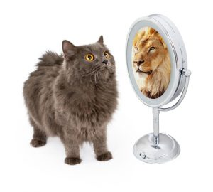 Check What Your Mirror Reflects | Brenda Martin | Feng Shui Consultant
